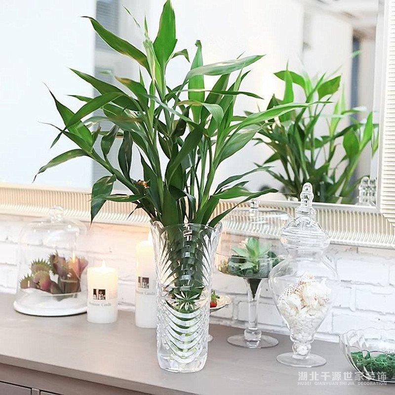 家庭装饰植物